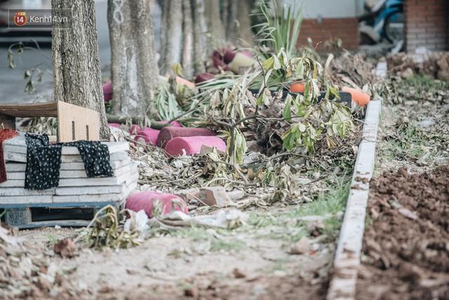 """Cận cảnh cuộc di cư của gần trăm cây hoa sữa từ hồ Tây ra bãi rác Nam Sơn để """"khử mùi"""" - Ảnh 16."""