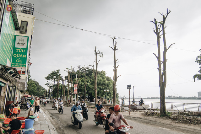 """Cận cảnh cuộc di cư của gần trăm cây hoa sữa từ hồ Tây ra bãi rác Nam Sơn để """"khử mùi"""" - Ảnh 18."""