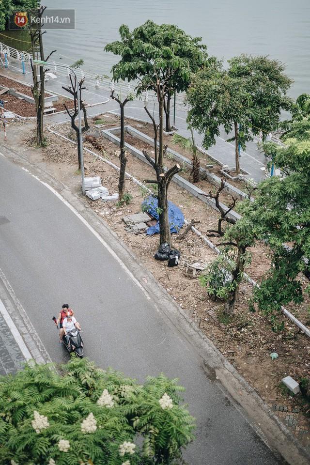 """Cận cảnh cuộc di cư của gần trăm cây hoa sữa từ hồ Tây ra bãi rác Nam Sơn để """"khử mùi"""" - Ảnh 7."""