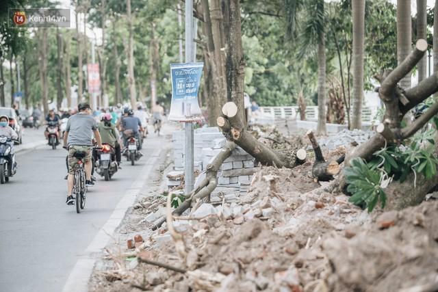 """Cận cảnh cuộc di cư của gần trăm cây hoa sữa từ hồ Tây ra bãi rác Nam Sơn để """"khử mùi"""" - Ảnh 9."""