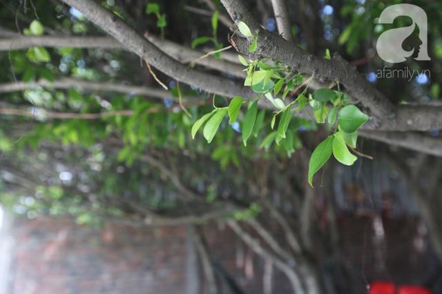 Ghé quán cà phê cây si vạn người mê của cô Tám miền Tây: Một năm mướn tỉa lá 3 lần, tiền lời chẳng đủ trả công! - Ảnh 11.