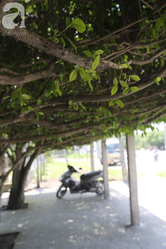 Ghé quán cà phê cây si vạn người mê của cô Tám miền Tây: Một năm mướn tỉa lá 3 lần, tiền lời chẳng đủ trả công! - Ảnh 6.