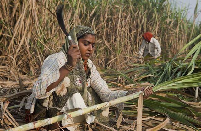 Câu chuyện đau xót về làng phụ nữ không tử cung bên những cánh đồng mía ở Ấn Độ - Ảnh 1.