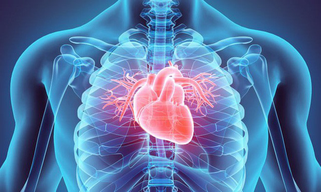 Ba triệu năm trước, chỉ vì mất một gen này mà con người trở thành loài động vật duy nhất dễ mắc bệnh tim mạch - Ảnh 1.