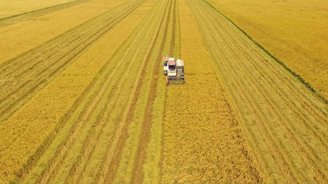 Thách thức tìm lời giải cánh đồng mẫu lớn cho nền nông nghiệp Việt Nam nhìn từ chuyện trồng mía của Thành Thành Công và trồng lúa ở Lộc Trời - Ảnh 4.