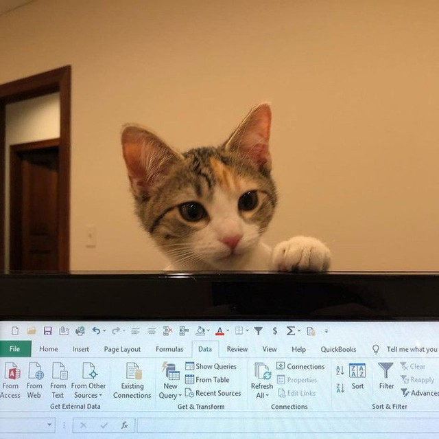 Công ty thuê hai chú mèo đáng yêu để giúp lập trình viên bớt căng thẳng, tăng cường tinh thần làm việc - Ảnh 2.