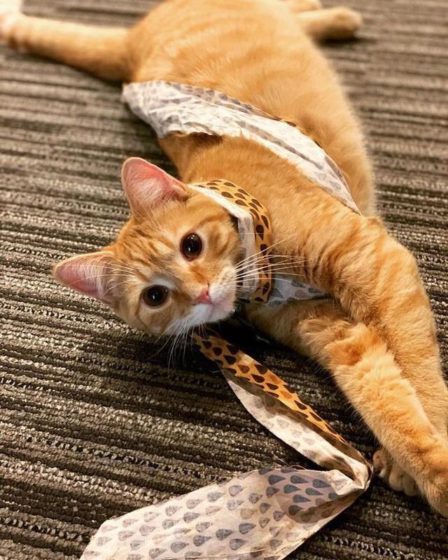 Công ty thuê hai chú mèo đáng yêu để giúp lập trình viên bớt căng thẳng, tăng cường tinh thần làm việc - Ảnh 13.