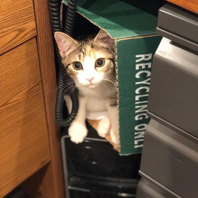 Công ty thuê hai chú mèo đáng yêu để giúp lập trình viên bớt căng thẳng, tăng cường tinh thần làm việc - Ảnh 3.