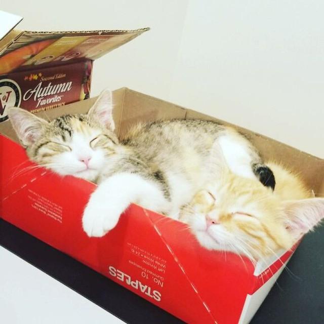 Công ty thuê hai chú mèo đáng yêu để giúp lập trình viên bớt căng thẳng, tăng cường tinh thần làm việc - Ảnh 4.