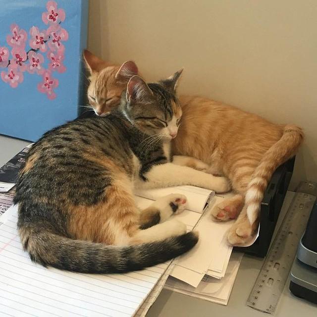 Công ty thuê hai chú mèo đáng yêu để giúp lập trình viên bớt căng thẳng, tăng cường tinh thần làm việc - Ảnh 6.