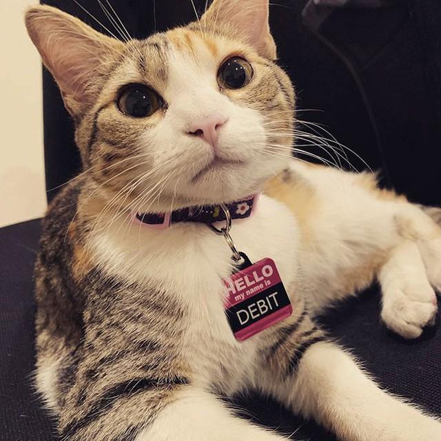 Công ty thuê hai chú mèo đáng yêu để giúp lập trình viên bớt căng thẳng, tăng cường tinh thần làm việc - Ảnh 9.