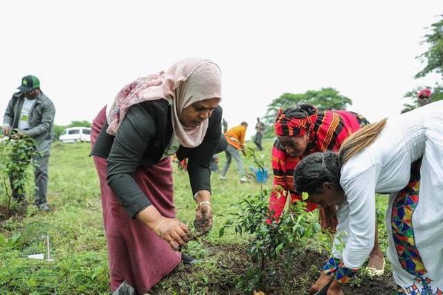 Kỷ lục đáng nể của Lục địa Đen: Trong 12 giờ, Ethiopia trồng được 350 triệu cây xanh - Ảnh 6.