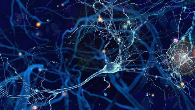 Bạn có thể nâng cấp trí nhớ của mình bằng cách cấy một con chip vào não bộ - Ảnh 1.