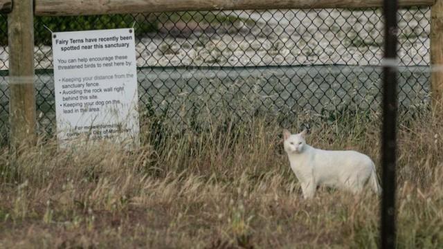 Chỉ một con mèo thiến đơn độc cũng có thể thảm sát toàn bộ hệ sinh thái - Ảnh 1.