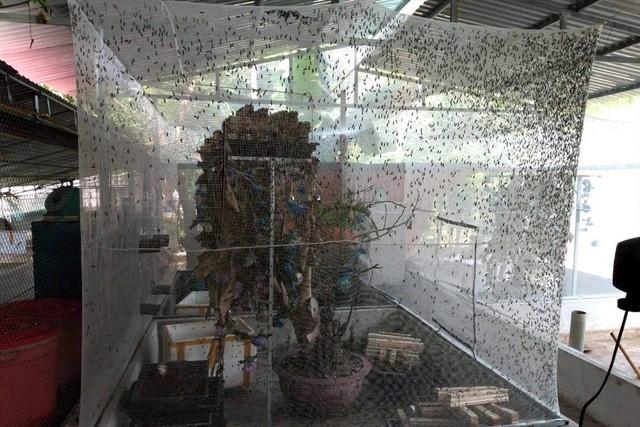 Nông dân Thanh Hóa lãi lớn nhờ... nuôi ruồi đẻ trứng vàng - Ảnh 1.
