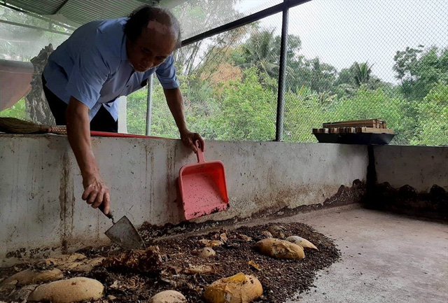 Nông dân Thanh Hóa lãi lớn nhờ... nuôi ruồi đẻ trứng vàng - Ảnh 3.