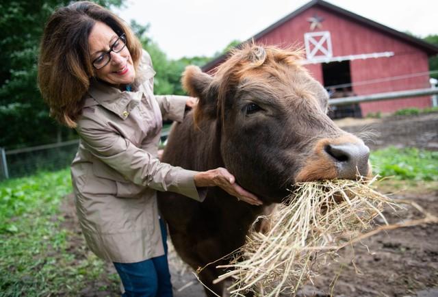 Kinh doanh farmstay: Về quê nuôi cá trồng rau chưa chắc ra tiền nhưng bán cái ôm của những con bò thì có, một trang trại thu phí 75 USD/giờ! - Ảnh 1.