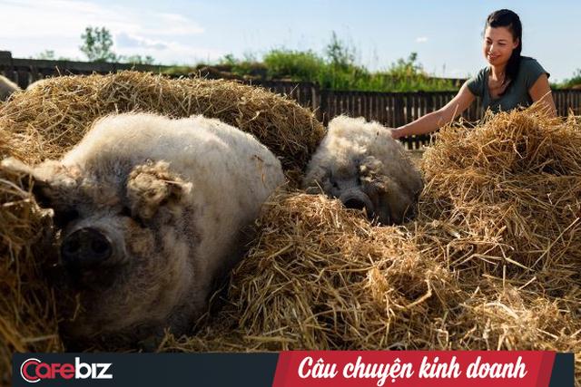 Anh hùng thầm lặng của ẩm thực Hungari: Tái sinh giống lợn Mangalica sắp tuyệt chủng trở thành báu vật quốc gia, được coi là bò Kobe của loài lợn - Ảnh 6.