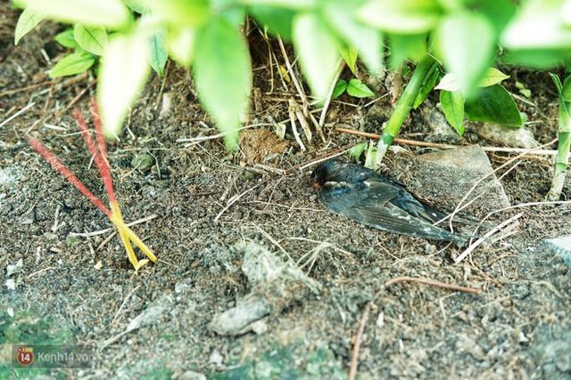 Nỗi buồn chuyện phóng sinh ngày rằm tháng 7: Những chú chim kiệt sức ngay khi được thả về trời - Ảnh 13.