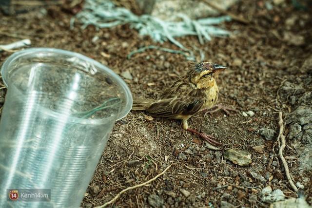 Nỗi buồn chuyện phóng sinh ngày rằm tháng 7: Những chú chim kiệt sức ngay khi được thả về trời - Ảnh 8.