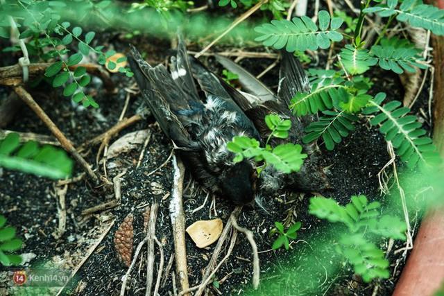 Nỗi buồn chuyện phóng sinh ngày rằm tháng 7: Những chú chim kiệt sức ngay khi được thả về trời - Ảnh 10.