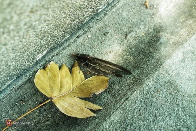 Nỗi buồn chuyện phóng sinh ngày rằm tháng 7: Những chú chim kiệt sức ngay khi được thả về trời - Ảnh 11.