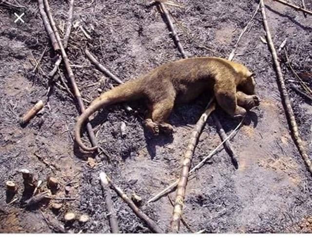 Những hình ảnh đau đớn vì cháy rừng Amazon - Ảnh 7.