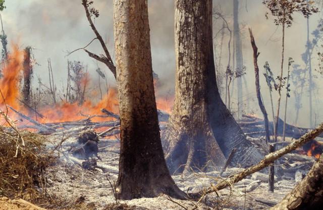 Những hình ảnh đau đớn vì cháy rừng Amazon - Ảnh 10.