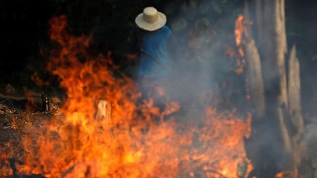 Kêu gọi sự quan tâm về cháy rừng Amazon nhưng bị Lindsay Lohan hỏi khó, Leonardo DiCaprio đáp trả ngay bằng bài viết 2 triệu like - Ảnh 4.