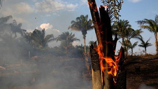 Kêu gọi sự quan tâm về cháy rừng Amazon nhưng bị Lindsay Lohan hỏi khó, Leonardo DiCaprio đáp trả ngay bằng bài viết 2 triệu like - Ảnh 5.