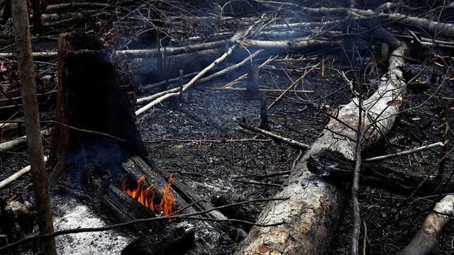 Kêu gọi sự quan tâm về cháy rừng Amazon nhưng bị Lindsay Lohan hỏi khó, Leonardo DiCaprio đáp trả ngay bằng bài viết 2 triệu like - Ảnh 6.