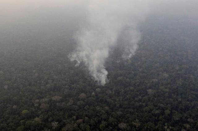 Giải thích trọn vẹn: Chuyện gì đang xảy đến với rừng già Amazon và bạn làm được gì để cứu lấy nó? - Ảnh 1.