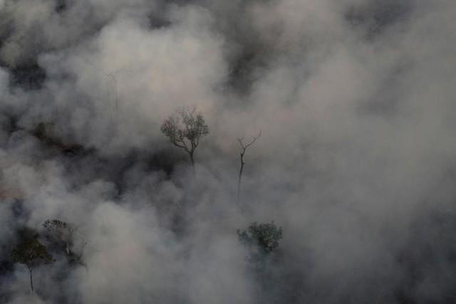 Giải thích trọn vẹn: Chuyện gì đang xảy đến với rừng già Amazon và bạn làm được gì để cứu lấy nó? - Ảnh 12.