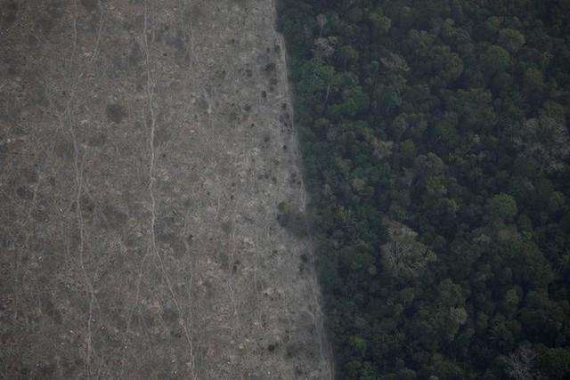 Giải thích trọn vẹn: Chuyện gì đang xảy đến với rừng già Amazon và bạn làm được gì để cứu lấy nó? - Ảnh 14.