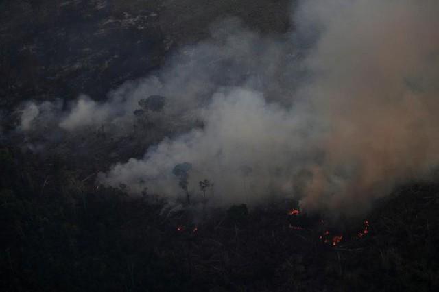 Giải thích trọn vẹn: Chuyện gì đang xảy đến với rừng già Amazon và bạn làm được gì để cứu lấy nó? - Ảnh 15.