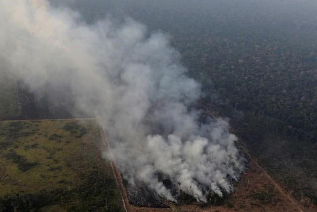 Giải thích trọn vẹn: Chuyện gì đang xảy đến với rừng già Amazon và bạn làm được gì để cứu lấy nó? - Ảnh 16.