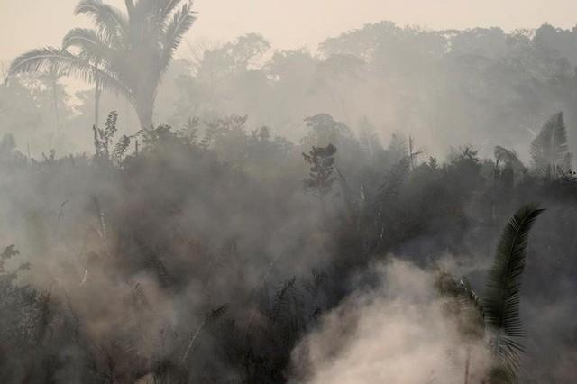 Giải thích trọn vẹn: Chuyện gì đang xảy đến với rừng già Amazon và bạn làm được gì để cứu lấy nó? - Ảnh 3.