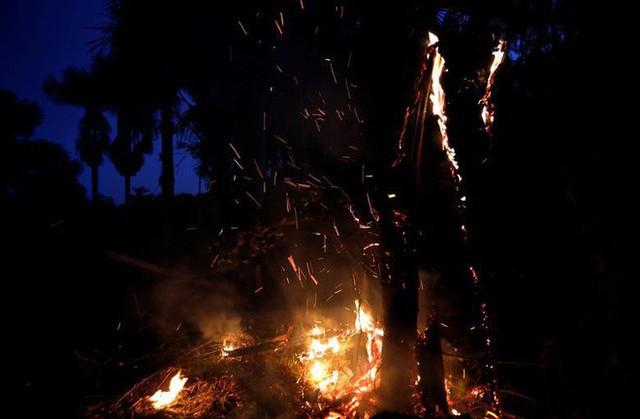 Giải thích trọn vẹn: Chuyện gì đang xảy đến với rừng già Amazon và bạn làm được gì để cứu lấy nó? - Ảnh 6.