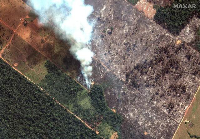 Giải thích trọn vẹn: Chuyện gì đang xảy đến với rừng già Amazon và bạn làm được gì để cứu lấy nó? - Ảnh 7.