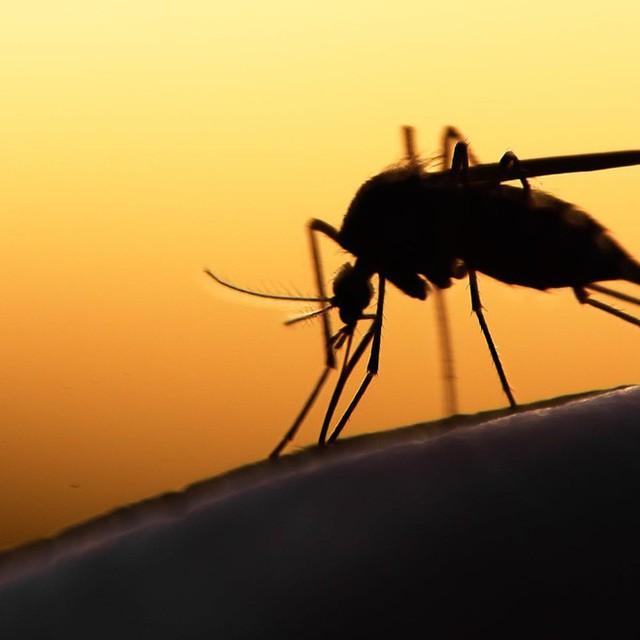 Bé nhỏ là thế, tại sao muỗi có thể đe dọa mạng sống của một nửa dân số thế giới? - Ảnh 7.