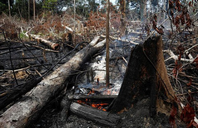 Giải thích trọn vẹn: Chuyện gì đang xảy đến với rừng già Amazon và bạn làm được gì để cứu lấy nó? - Ảnh 8.