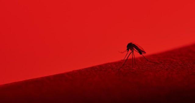 Bé nhỏ là thế, tại sao muỗi có thể đe dọa mạng sống của một nửa dân số thế giới? - Ảnh 8.
