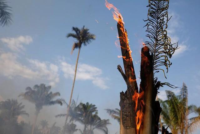 Giải thích trọn vẹn: Chuyện gì đang xảy đến với rừng già Amazon và bạn làm được gì để cứu lấy nó? - Ảnh 9.