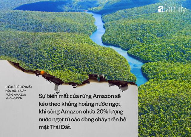 Nếu rừng Amazon biến mất, thế giới mất đi 20% lượng nước ngọt, 20% lượng oxy, con người chịu ảnh hưởng trực tiếp - Ảnh 2.