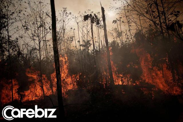 Sau Leonardo DiCaprio, Tim Cook cho biết Apple sẽ quyên góp tiền để bảo tồn đa dạng sinh học và khôi phục rừng Amazon - Ảnh 1.