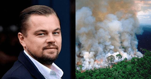 Sau Leonardo DiCaprio, Tim Cook cho biết Apple sẽ quyên góp tiền để bảo tồn đa dạng sinh học và khôi phục rừng Amazon - Ảnh 2.