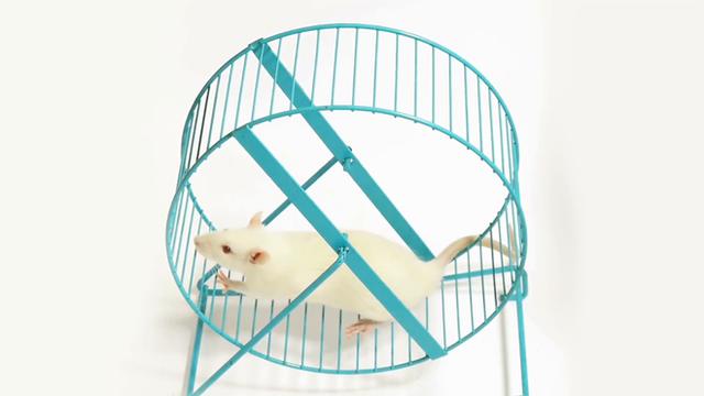Hỏi khó: Ngoài con người ra, có loài động vật nào biết tập thể dục không? - Ảnh 2.
