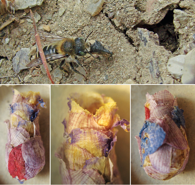 Chính phủ Anh kết án tử hình 1 con ong, nhưng chưa kịp bắt giữ thì đối tượng đã bỏ trốn theo đường chim bay - Ảnh 1.