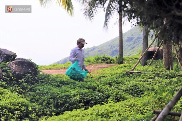 Ông chú bán kem dễ thương nhất Đà Nẵng: 3 năm cặm cụi nhặt rác ở bán đảo Sơn Trà - Ảnh 5.