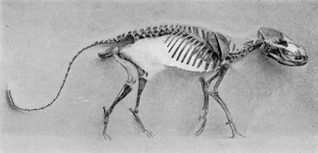 Thí nghiệm thuần hóa của Nga biến loài cáo bạc trở thành chó - Ảnh 2.